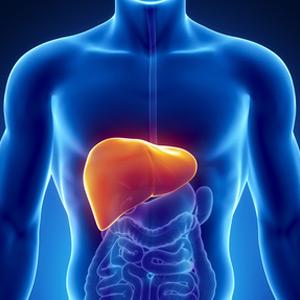 Hepáticos y digestivos